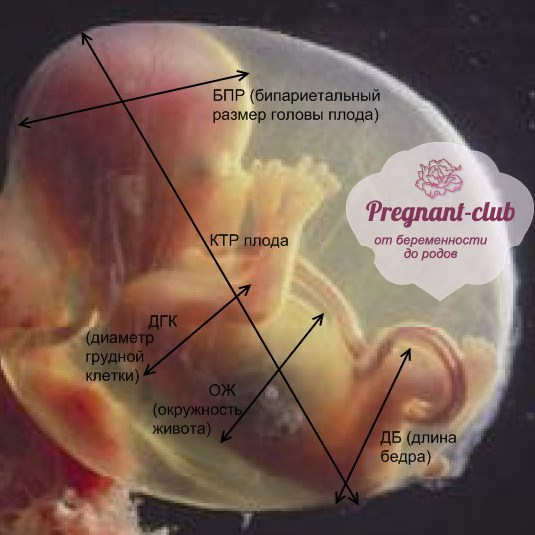 Показатели фетометрии на узи